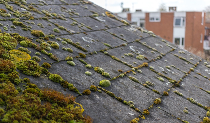 Why is There Moss on My Roof?